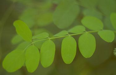 Verde_zen