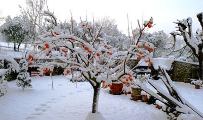 Giardino_bianco