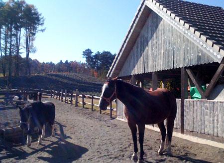 Pony_tirolo